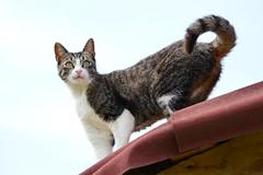 DSC_4547 (emina.knezevic) Tags: pet petphotography animal cat cats nature animalphotography