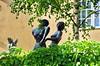 25 Stockholm Juin 2018 - Milles Garden (paspog) Tags: statue statues sculpture sculptures stockholm suède sweden schweden millesgarden juni june juin 2018