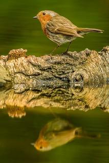 Robin, reflected