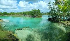 Laguna di Bacalar-Messico (johnfranky_t) Tags: laguna bacalar messico johnfranky t nuvole acqua dolce samsung s7 mangrovie palma