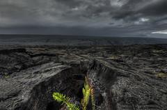New Life On Lava Field (Klaus Ficker --Landscape and Nature Photographer--) Tags: lava newlife vegetation volcano lavarocks hawaii kilauea clouds rain storm kentuckyphotography klausficker canon eos5dmarkiv usa