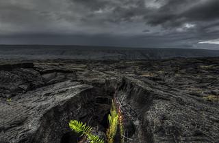 New Life On Lava Field