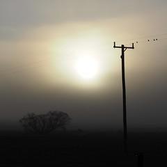 Sunrise through fog (Smoucher) Tags: australia fog cold morning burst sun sunrise rural