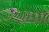 _J5K0642.0617.Sáng Ma Sáo.Bát Xát.Lào Cai. (hoanglongphoto) Tags: asia asian vietnam northvietnam northeastvietnam landscape scenery vietnamlandscape vietnamscenery vietnamscene terraces terracedfields terracedfieldsinvietnam transplantingseason sowingseeds hdr walley house green canon canoneos1dsmarkiii canonef200mmf28liiusm đôngbắc làocai bátxát sángmasáo phongcảnh ruộngbậcthang ruộngbậcthangbátxát mùacấy bátxátmùacấy sángmasáomùacấy thunglũng xanh ngôinhà