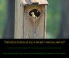 Three species of ducks lay eggs in one box -- who will jump out? (Tara Tanaka Digiscoped Photography) Tags: duck duckling hatching hoodedmerganser blackbelliedwhistlingduck digiscoped gh4 4k manualfocus woodduck swamp cypress florida bird