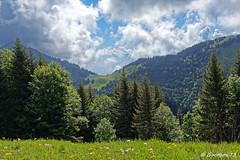 Col du Haut du Four - Bauges (Goodson73) Tags: didier bonfils goodson73 dgoodson bauges pointe de chaurionde 2157m parc du mouton rando montagne