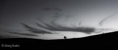 Evening Clouds (JKmedia) Tags: dartmoor boultonphotography blackwhite blackandwhite bw garden devon england tree silhouette panorama