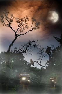 ~月光下 走進森林 您會遇到什麼 ?~