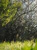 Spring Meadow Pasture Nature Germany Bavaria Countryside © Frühling Wiese Bayern Oberbayern © (hn.) Tags: 2018 april bavaria bayern blowball blume busch copyright copyrighted dandelion deutschland dew eu europa europe feld field flora flower frã¼hling frühling frühlingsblume gaissach germany greeneland hecke hedge hedgerow heiconeumeyer löwenzahn meadow morgentau morningdew natur nature oberbayern pasture pflanze plant pusteblume shrub spring springflower strauch taraxacum taraxacumofficinale tau tã¶lzerland upperbavaria wiese wildflower wildflowers wildblume wildblumen gaisach