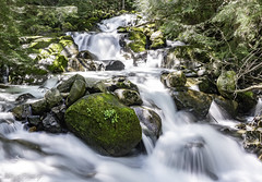 Humpback Creek (Shawn Herring) Tags: long exposure creek washing mt baker snoqualmie national forest green moss water blue trees sunshine sony a7iii a7 iii waterfall babbling brook nature shawn herring