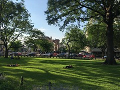 June evening sun and shadow, green lawn at Dupont Circle NW, Washington, D.C. (Paul McClure DC) Tags: washingtondc districtofcolumbia dupontcircle june2018 park tree people green grass