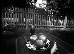 Nature Morte (TheIguanaMan) Tags: lensless pinhole stilllife naturemorte