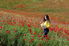 KURDISTAN ...  کوردستان (Kurdistan Photo كوردستان) Tags: our land kurdistan democratic party koerdistan kurdistani kurdistán kurdistanê zagros zoregva zazaki zaxo zindî azadî azmar xebat xaneqînê christianity cegerxwin van love mahabad music arbil democracy freedom genocide herêmakurdistanê hawler hewler hewlêr halabja herêma judaism jerusalem kurdistan4all lalish qamishli qamislo qamishlî qasimlo war erbil efrînê refugee revolution rojava referendum yezidism yazidis yârsânism unhcr peshmerga peshmerge كوردستانيان نهورۆز barzani people 184 garden rock soil flower bridge sky river water viaduct mountain grass landscape field snow ruins