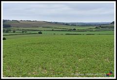 Lincs Wolds 09.06.18 (3) (nowboy8) Tags: nikon nikond7200 redhill snipedales lincolnshirewildlifetrust lincolnshire wildlife walk trees