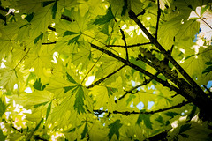 Tree leaves ... (Julie Greg) Tags: tree leaf leaves nature colours details fujifilm park macro england kent