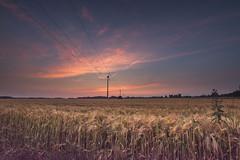DSC_6990-Bearbeitet (brooks 30) Tags: sonne sonnenuntergang münsterland felder raesfeld abends landschaftsfotografie licht wolken rot farbe