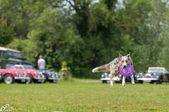 British Weekend-3129.jpg (Darklight-Photo) Tags: hunde remeringhausen britishweekend dogfrisby