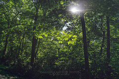 Sun-flared, 2018.06.02 (Aaron Glenn Campbell) Tags: knoxville tn tennessee greenway thirdcreek outdoors optoutside nature nikcollection analogefexpro on1effects backlit backlighting trees wooded path trail walk hiking leaves foliage lush greenery sony a6000 ilce6000 mirrorless sigma 19mmf28exdn primelens wideangle emount