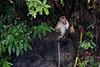 IMG_0072 (- marco) Tags: ella srilanka hillregion travel fuji xe3 asia