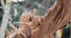 Splinters (5) (brycingr) Tags: perspective gardens mcclain rosetta cropped macro detailed desaturated splinters cracked nature lightroom tree broken wood fallen edited nikkor nikon d3300 toronto ontario canada