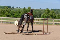 JBC_5784.jpg (Jim Babbage) Tags: krahc bethany appaloosa horses horseshow 2018