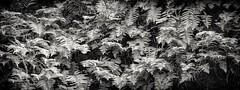 Frems 02 (CDay DaytimeStudios w/1,000,000 views) Tags: california eastbay eastbayregionalparks frens hillside sanfranciscobayarea sf sunolca sunolpark sunolregionalpark sunolvalley winter