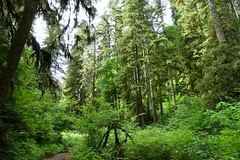 Silver falls state park.  #oregon #nofilter #sonyrx100m3 (tommundal) Tags: oregon nofilter sonyrx100m3