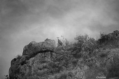 looking from above (christinehag) Tags: chèvre goat monochrome blackandwhite canyon gorge