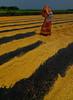 WORKING INTO COLOR (mailmesanu20111) Tags: colours pattern ricemill rice paddy ruralbengal indianpeople india indianwomen imnikon imagestock shutterstock redyellow nikon nikoncontest nikonindia nikonasia life people food westbengalfoodsupply pictorialphotography