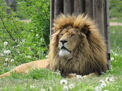 IMG_0135 (duncansmith50) Tags: yorkshirewildlifepark lions polar bears black rhino tigers giraffes doncaster