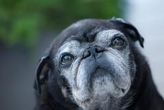 Dog portrait (steffos1986) Tags: dog animal pet portrait