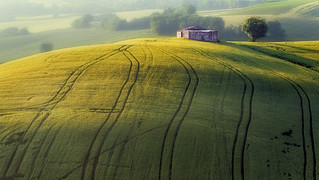 Scorci di campagna marchigiana (Corridonia, contrada Colle San Martino)
