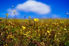 Growing Wild (Tony Tavares) Tags: a7rii alpinevisitorcenter colorado familyvacation landscape portrait rockymountainnationalpark rockymountains zarina
