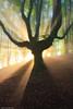 The Lights of the Gods (Hector Prada) Tags: forest summer light tyndall mist bosque verano luz bruma arbol tree niebla basquecountry