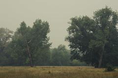 Character Trees (Netsrak) Tags: baum bäume dunst europa europe landschaft meindorf natur nebel sieg fog haze landscape mist