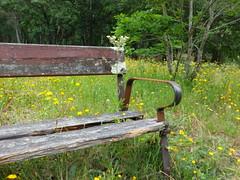 Banco solitario. (Los colores del Barbanza) Tags: banco parque flores arboles verde amarillo dolmen de axeitos ribeira coruña barbanza galicia españa banc forêt arbres vert jaune marron