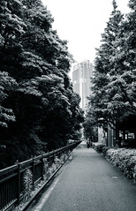 The Long Road (Mike Kniec) Tags: japan tokyo road park pavement city sony street photography streets a7 crossing cityscape urban japanese monochrome long blackandwhite tree building