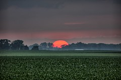 Sunset (Ray Cunningham) Tags: 61859 ogden illinois hdr sunset corn field