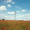 (Andrew :-)) Tags: bronicasqa zenzanon80mm28 kodakportra160 120 6x6 mediumformat poppies poppyfield