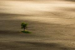 solo (anna barbi) Tags: ombrello campo valdorcia alberosolitario