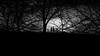 Lost in the forest (parenthesedemparenthese@yahoo.com) Tags: dem bw copenhague danemark denmark hiver kobenhavn monochrome nb noiretblanc shadows silhouettes trees women arbres blackandwhite branch branches byn canoneos600d course ef50mmf18ii evening ombres runners soir winter