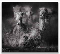 Tightly Grouped .... (KevinBJensen) Tags: monochrome mono dark france camargue horses animals nature paul keates risu