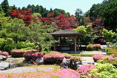 Temple garden (Greg Peterson in Japan) Tags: koka 滋賀県 shiga japan 甲賀市 shigaprefecture