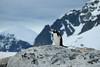ANTARCTICA (L'inspiration vient en expirant) Tags: antarctic antarctica south pole sud antarctique manchot penguins ice snow desert glaciers