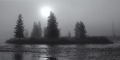 Foggy Island (Tony Hochstetler) Tags: nikon d800e nikon2870mmf28 snakeriver grandtetonsnationalpark yellowstonenationalpark wyoming island fog panorama trees pine river water earlymorning landscape horizontal