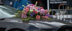 Hood Decorations (Scott 97006) Tags: car automobile hood wet rain flowers pretty bouquet decoration parade mustang