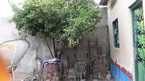Jama's courtyard