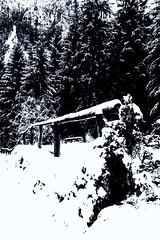 Fence (u.giommetti) Tags: biancoenero blackandwhite staccionata fence europa europe alpi montagna mountain paesaggio landscape alberi trees neve snow inverno winter lombardia italia italy borno