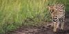 A Serval.... what a moment at the wonderful Masai Mara (Markus Jaschke) Tags: afrika kenia mara masai