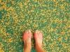 141/365: after the wind (Michiko.Fujii) Tags: pinksandals yellow yellowandgreen yellowpinkandgreen mayflowers petals flowers blossom eyesdown afterthestorm